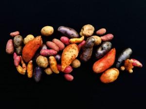 kartoffel-titelbild